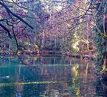 Secret lake in an automn forest by Alex Lehner