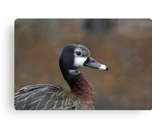 White Headed Whistling Duck Canvas Print