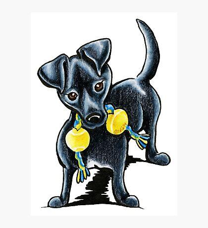 Small Black Dog Tucker Photographic Print