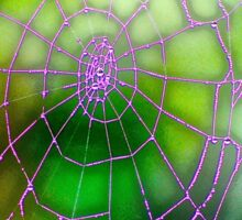 dark green giant spider web motif Sticker