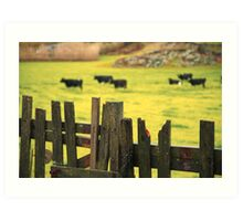 Pasture, fence and cows Art Print