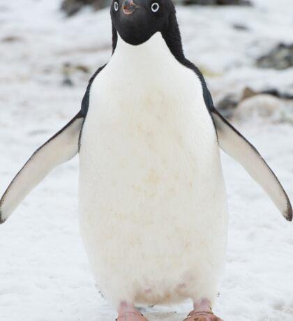 An Adelie penguin, from Antartica Sticker
