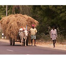 Carting Fodder, Gingee, Tamil Nadu, India Photographic Print