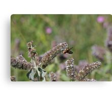 flower with insect Canvas Print