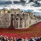 Poppies round the Tower by PhotoLouis