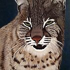 Bobcat by maggie326
