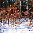 The Beeches by Debbie Oppermann