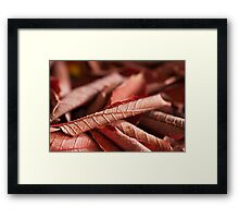 Dried Rolled Plum Leaves - Macro Framed Print