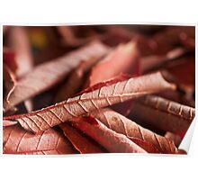 Dried Rolled Plum Leaves - Macro Poster