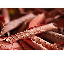 Dried Rolled Plum Leaves - Macro Photographic Print