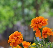 orange flowers by arnau2098