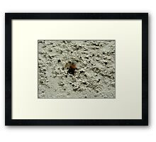 Bumble Bee on a Wall Framed Print