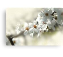 Blooming White Canvas Print