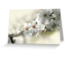 Blooming White Greeting Card