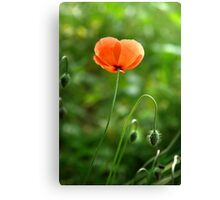 Red Poppy Flower in the Field Canvas Print