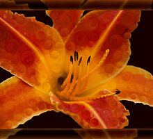 Closeup Wth A Vibrant Orange Lily Abstract Flower by owfotografik