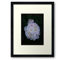 White Peony And Companion Abstract Flower Painting Framed Print