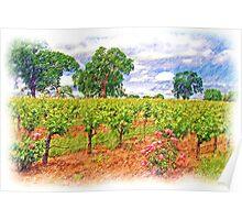Vineyard Roses Poster