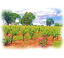Vineyard Roses Photographic Print