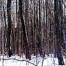 Can't See The Forest For The Trees by Debbie Oppermann