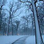 Winter blues by Alberto  DeJesus