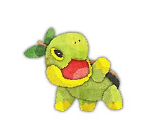 pokemon - turtwig Photographic Print
