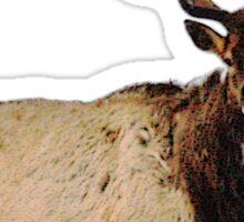Bull elk 7 Sticker