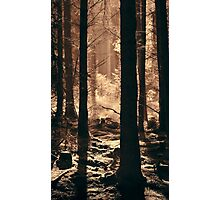 The Glow Of A Forest Dawn Photographic Print