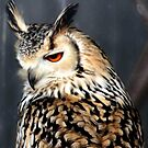 Beauty of the European Eagle Owl by missmoneypenny