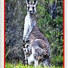 Happy New Year from Australia! by George Petrovsky