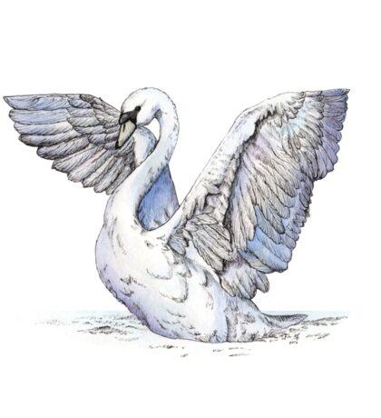 Watercolor swan Sticker