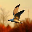 Free Bird by Adam Kuehl