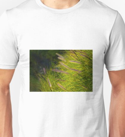 Fountain Grass, Pennisetum alopecuroides, in bloom Unisex T-Shirt
