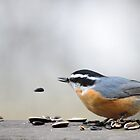 Nuthatch by Laurie Minor