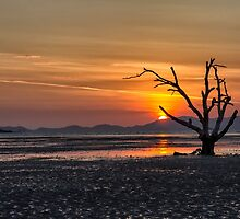 Dead tree sunrise by Kevin Hellon