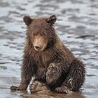 Cub's Foot Itches by Owed To Nature