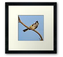 New Holland Honey-Eater - Spring Sky Framed Print