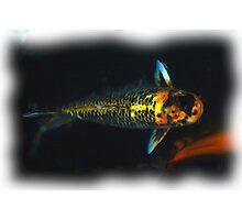 Koi Fish at The Alamo Photographic Print
