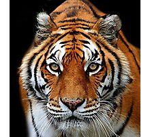 Looking into my Eyes Kuala Lumpur Zoo  Photographic Print