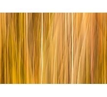 Abstract Cattails Series #5 Photographic Print