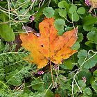 Autumn Leaf by Susan S. Kline