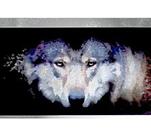 Gray Wolf Photographic Print
