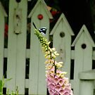 Little Mr Wonderful on a Foxglove by Gabrielle  Lees