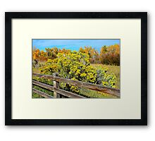 Autumn Yellows and Oranges  Framed Print