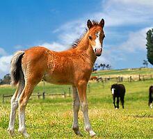 Welsh Mountain Foal by Rivington