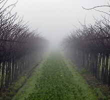 Early Morning Vineyard - San Joaquin County, CA by Rebel Kreklow