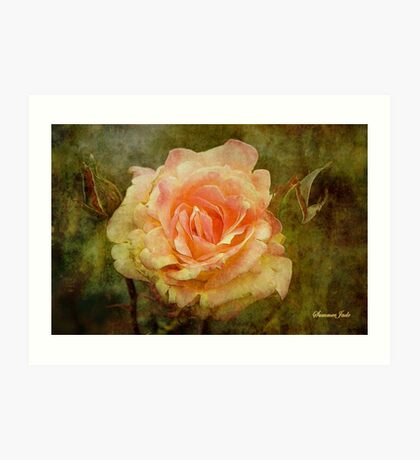 Damaged ~ a Rose with a Message Art Print