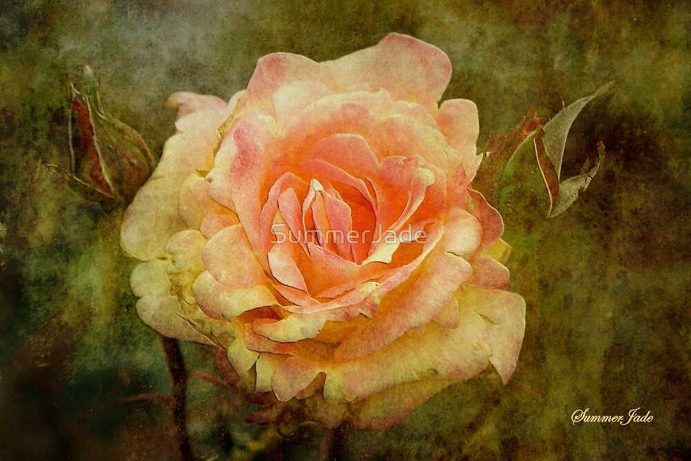 Damaged ~ a Rose with a Message by SummerJade