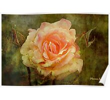 Damaged ~ a Rose with a Message Poster