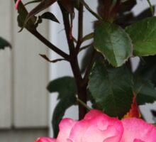 Roses on a Trellis Sticker